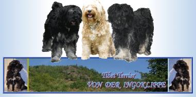 Tibet Terrier Von Der Ingoklippe Tibet Terrier Berlin Brandenburg Tibet Terrier Von Kangri Jimado Viele Infos Und Bilder Von Unseren Tibet Terriern Aus Brandenburg Beeskow